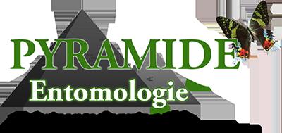 Pyramide Entomologie